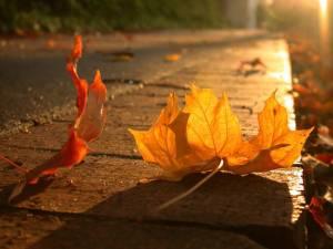 sidewalk_leaf