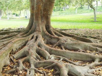 root-tree-2